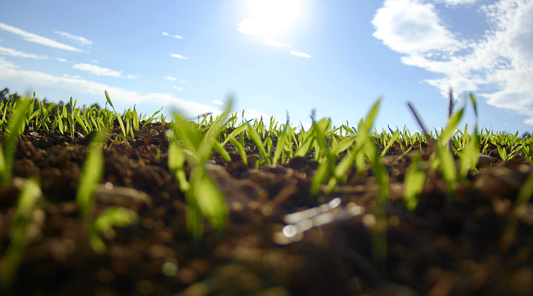 SmallCap Growth AIM Portfolio