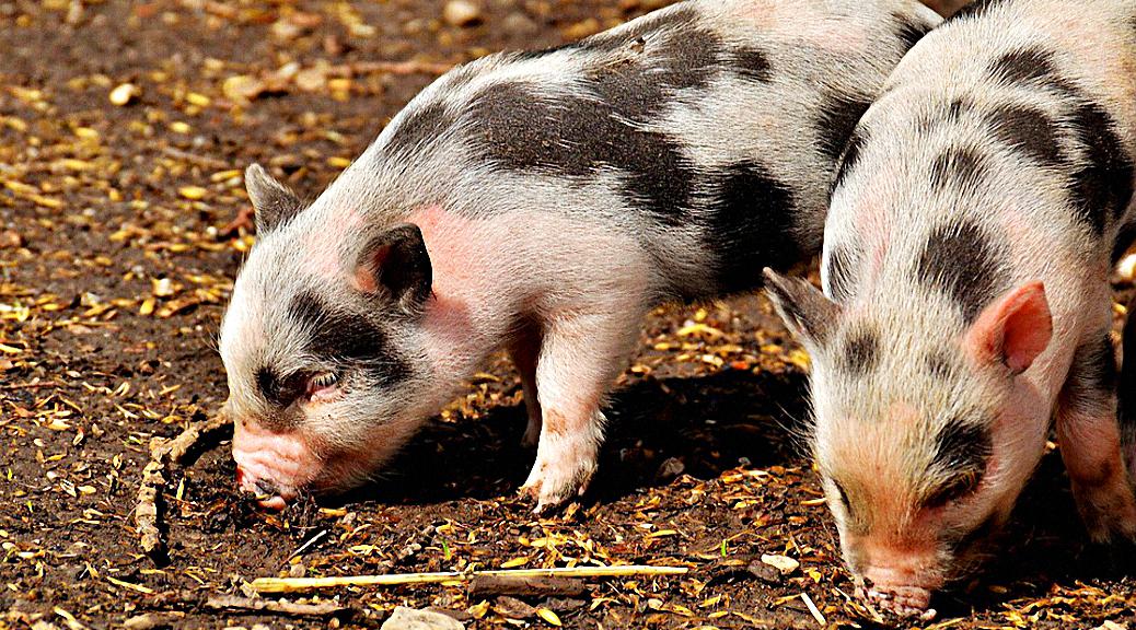 Piggyback Portfolio